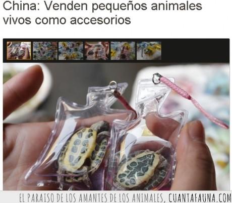 animal,bolsa,chinos,maltrato,tortuga