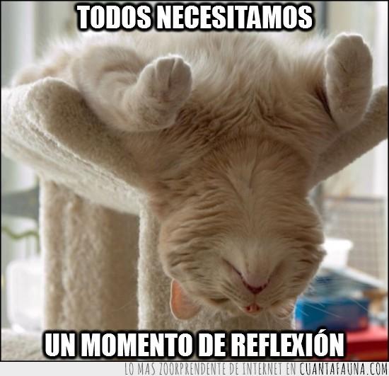 de espaldas,gato,momento,reflexion