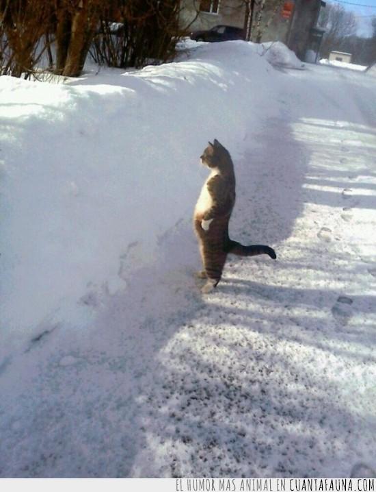 de pie,en la casa del pueblo,nevada,nieve