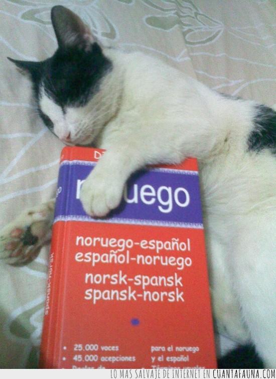 aprender,diccionario,dormir,idioma,noruego,Ramses