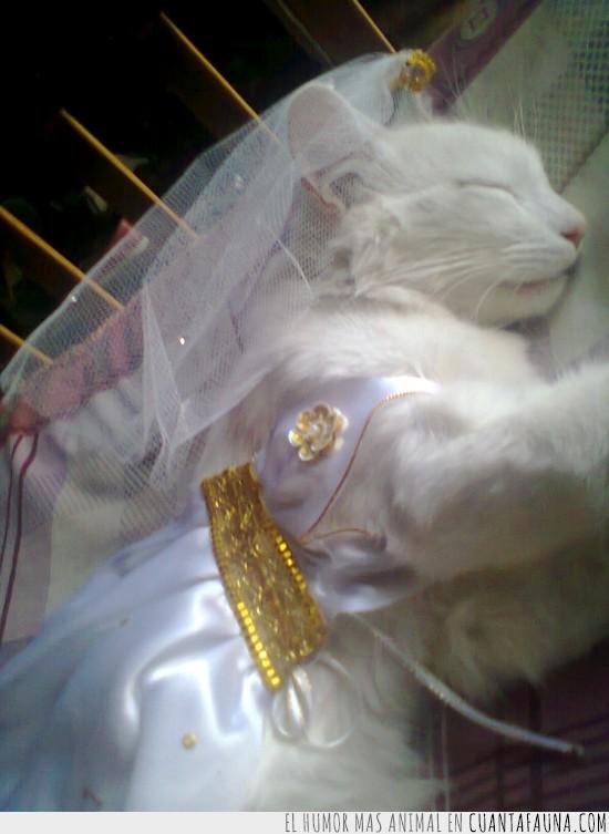 disfraz,gato,macho,princesa,princesita,vestido