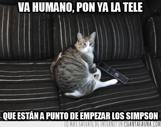 gato,gordo,mando a distancia,simpson,television,tv,vago
