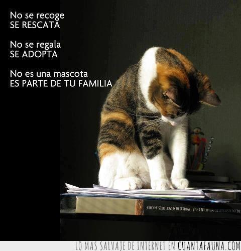 adopta,cuida,familia,gato,quiere