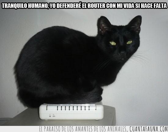 caliente,defender,dormir,encima,gato,listo,negro,router