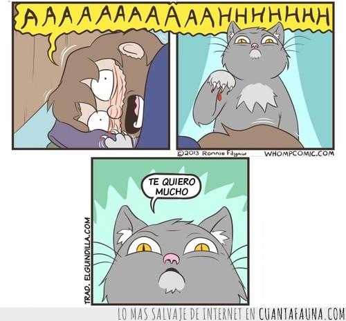 comic,despertar,dormir,gato,zarpazo