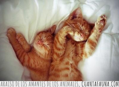 acostados,dormir,gatos,tiernos,tumbados