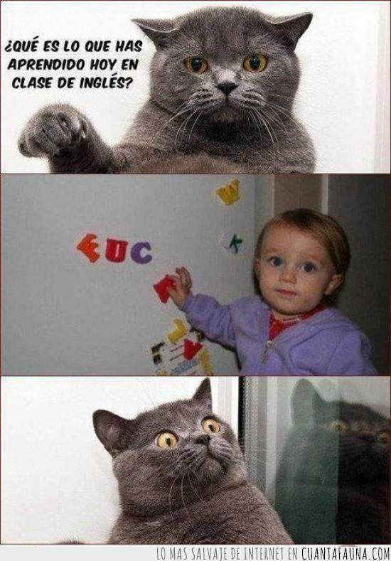 clase de ingles,gato sorprendido,imanes de nevera