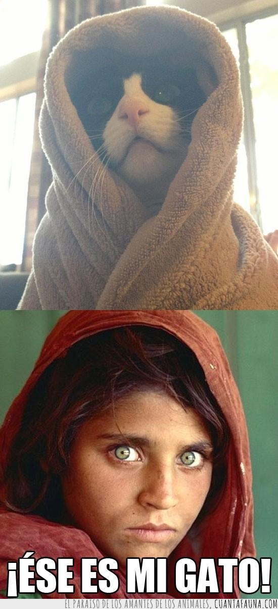 foto,gato,la chica de los ojos verdes,national geographic,ojos verdes,portada