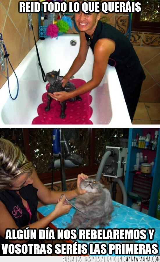 gato,mojado,pelo,peluqueria felina,venganza