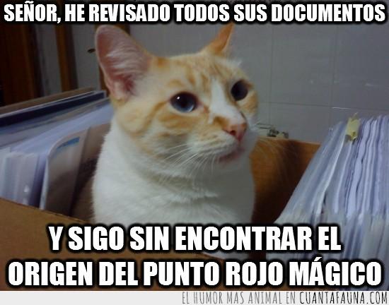 archivos,caja,documentos,papeles