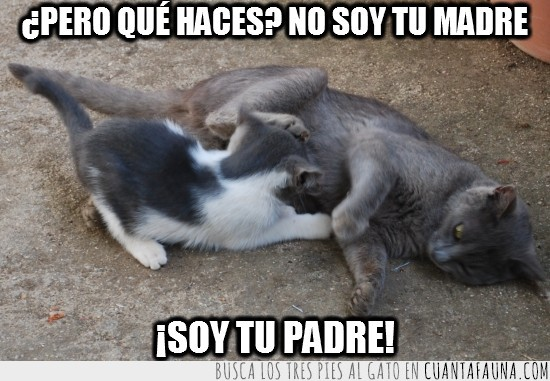amamantar,gato despistado,madre,mamar,padre