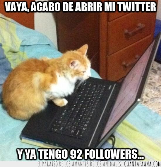 cuentas,gato,gatos en twitter,red social