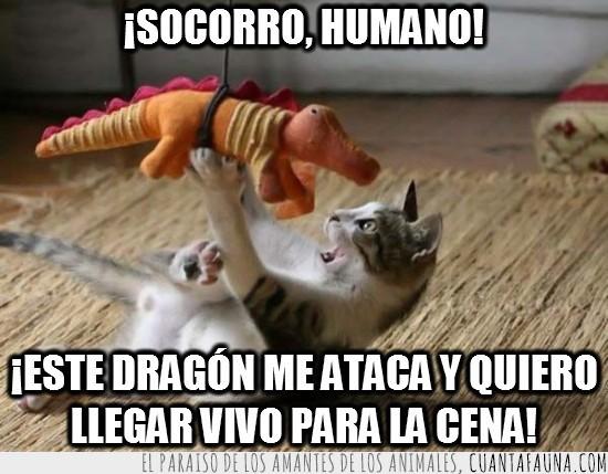 cena,dragón,gato,jugar,peluche,socorro