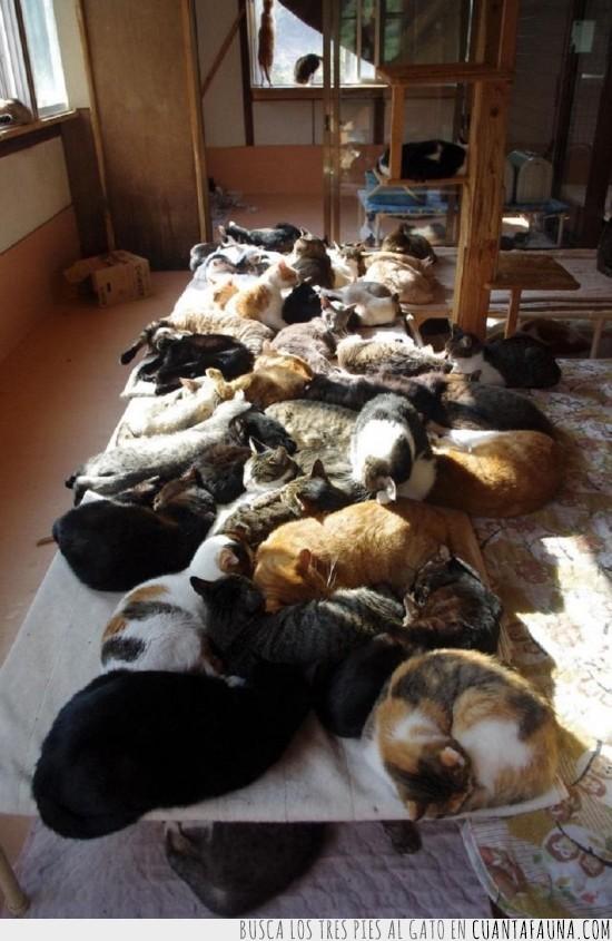 dormir,gato,hora,muchos gatos,siesta