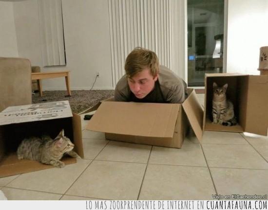 cajas,carton,casa,Humano