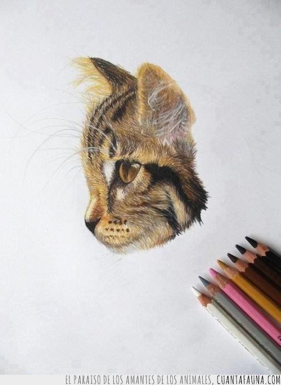 Cuánta Fauna Arte Con Los Lápices De Colores