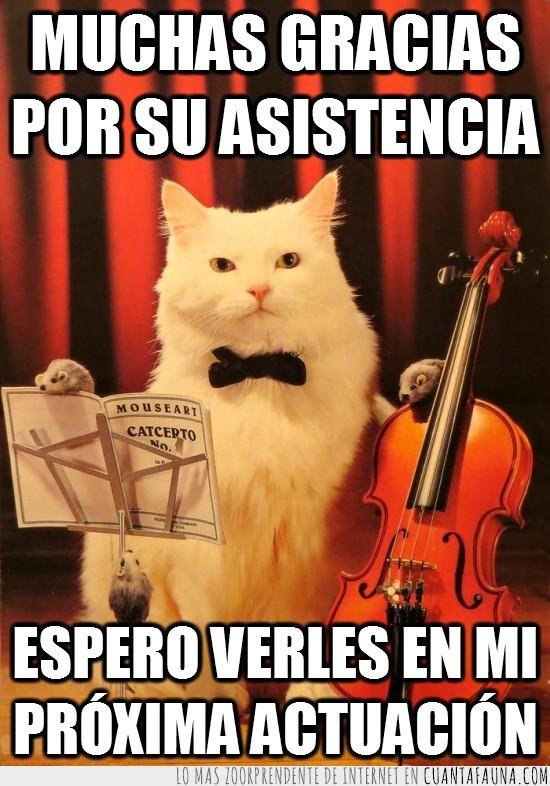 bajo,bigotes,catcerto,Gato,musica,violin
