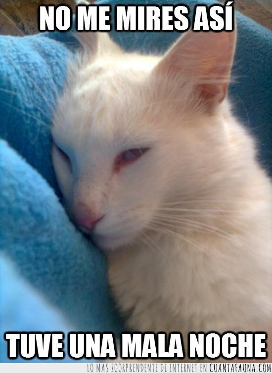 borracho,despertar,gato,mala noche,resaca