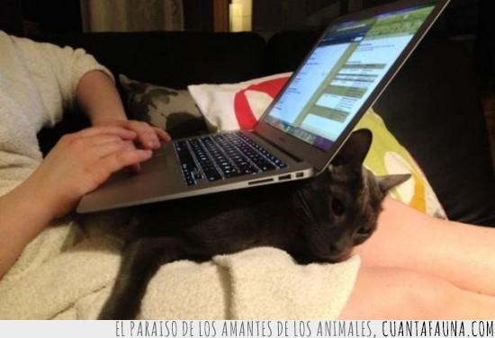 apoyar,encima,gato,laptop,mesa,ordenador,portatil