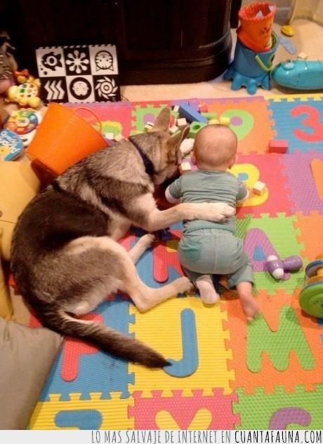 ayuda,bebe. jugar,perro