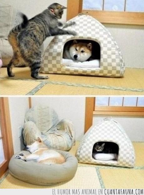 dormir,ganar,gato,perder,perro,techo