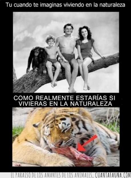 comer,naturaleza,realidad,sangre,tarzan,tigre
