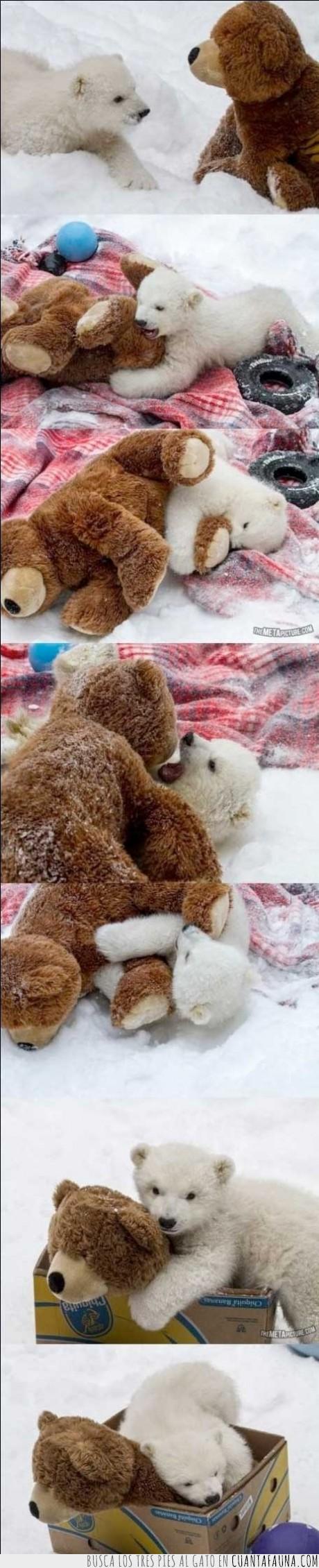 amigo,blanco,jugar,osezno,osito,oso,peluche,polar