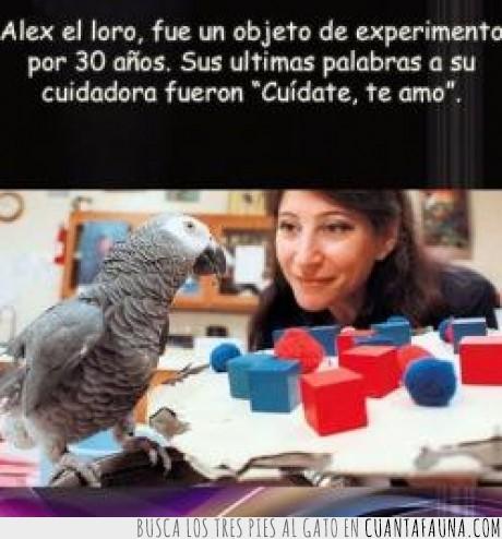 alex,cuídate,experimento,loro,muerto,palabras,te amo,ultimas
