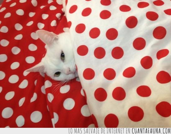 dormir,gato,sabanas,tapado,taparse,topitos,topos