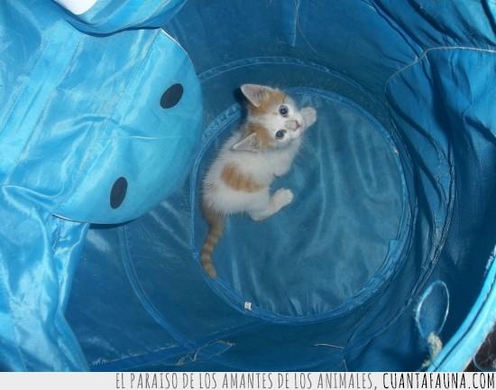 atrapado,cachorro,cesto de la ropa sucia,gatito
