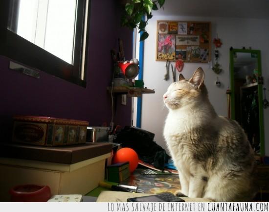 deslumbrado,dormir,gata,luz,sueño,ventana