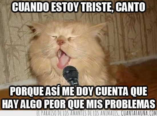cantar,cantar mal,gato cantante,microfono,problemas