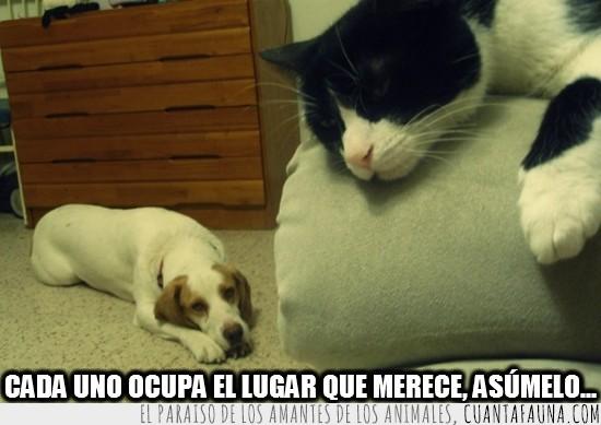 gato,lugar,merecer,ocupar,perro,sofa,suelo