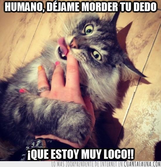 dedo,gato,loco,mano,morder,uñas