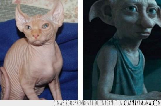dobby,gato,gato esfinge,harry potter,sphinx