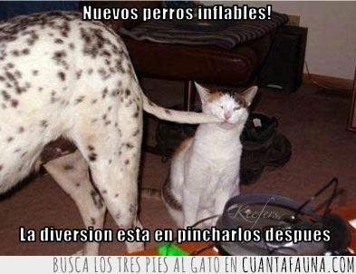 cola,inflable,inflar,morder,perro,pinchar