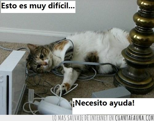 cables,cansado,difícil,gato,wii