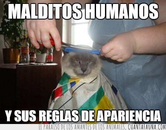 cortar,corte,expresion,gato,pelo,peluqueria,su cara lo dice todo