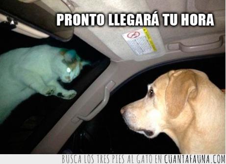 coche,gato,llegara tu hora,luna delantera,miedo,perro