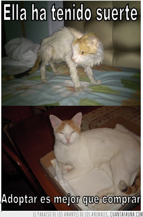 adopcion,adoptar,cambio radical,gatos