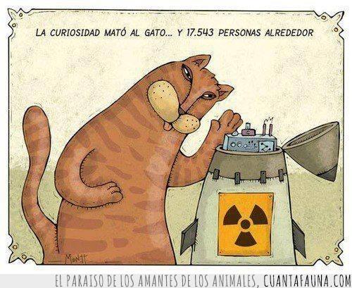 bomba,bomba atomica,bomba nuclear,comic,gatos,troll