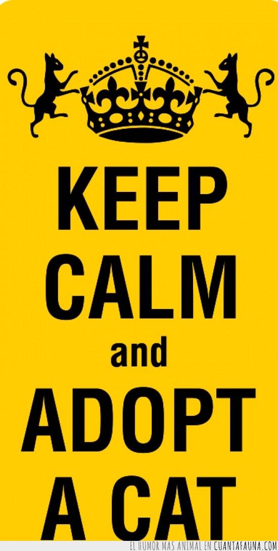 adopcion,adopta gatos,adoptar,gato,keep calm