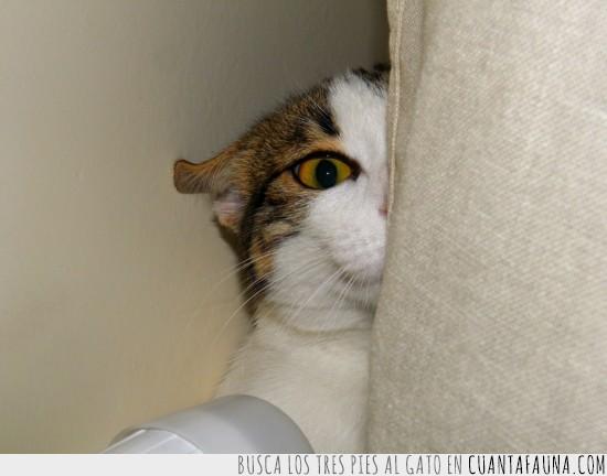 cuidado,esconder,espia,gato,observar,ojo