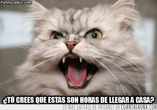 Enfadado,Gato,Gritar,Horas de llegar a casa