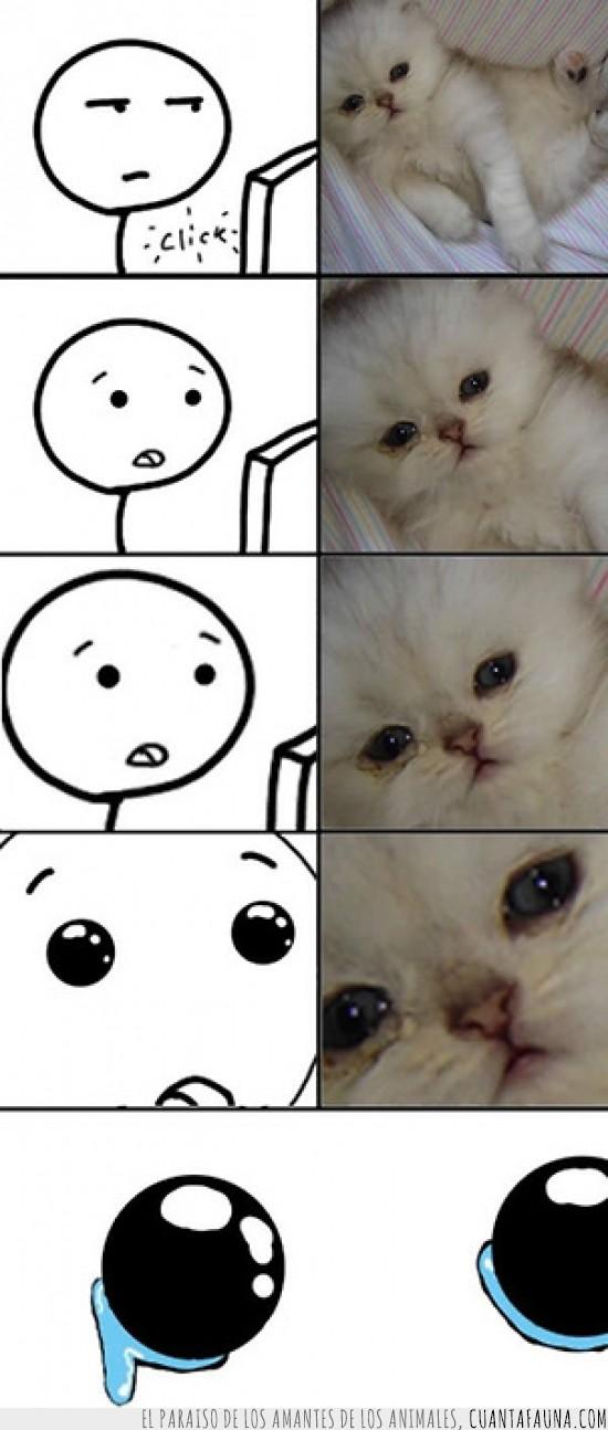 gato,lagrimas,llorar,ordenador,penita,sentimental