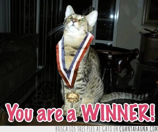 ganador,gato,medalla,mundial,winner