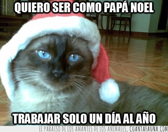 Gato,navidad,papa noel,santa claus,trabajar