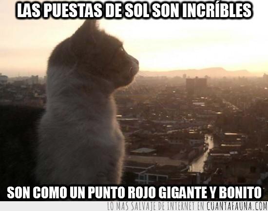 atardecer,cielo,ciudad,contemplar,gato,observar,puesta de sol