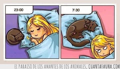 almohada,cama,dormir,echar,gato,ocupar