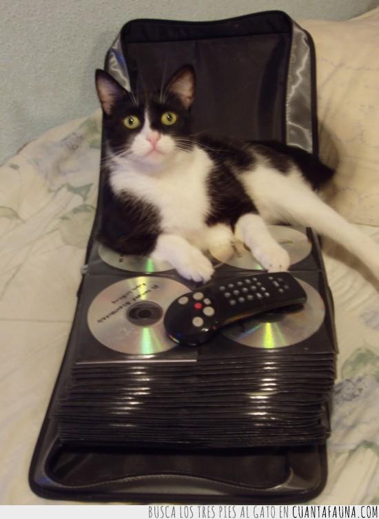 cds,discos,dvd,elegir,estuche,funda,gato,peliculas